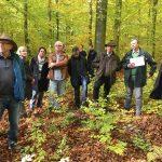 Waldbegehung des Leimener Gemeinderats - Trockenheit machte dem Wald zu schaffen