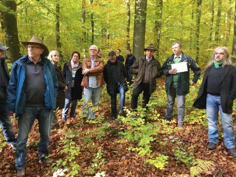 Waldbegehung des Leimener Gemeinderats – Trockenheit machte dem Wald zu schaffen