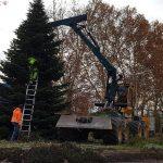 Die Adventszeit rückt näher: Der große Weihnachtsbaum am Kreisel steht bereits