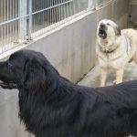 Tierschutz und das Tom-Tatze-Tierheim Walldorf: Helfen kann so einfach sein