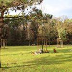 Waldfriedhof Sandhausen: </br>Naturnahe Bestattungen unter Bäumen