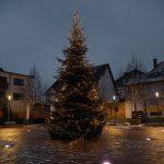 Nußloch & Leimen: Feuerwehr holt Samstag alte Weihnachtsbäume ab