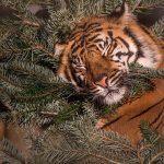 Weihnachten im Zoo - Tiergeschichten am 24. Dezember im Raubtierhaus