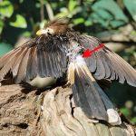Faszinierende Vogelwelt: Antibakterielle Superkräfte dank Bürzeldrüse?