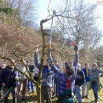 Bäume und Gehölze richtig schneiden – </br>Hans Appel erläuterte und zeigte wie