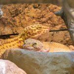 Leoparden im Kleinen Affenhaus? Faszinierend gefleckter Neuzugang im Zoo
