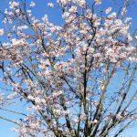 Das erste echte Frühlings-Wochenende des Jahres - Es blüht und fleucht!