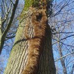 Sensation: Seltener Buchen-Lindwurm im Nußlocher Stadtwald entdeckt