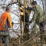 Straßensanierung kommt - Derzeit Baumfäll- und Gehölzarbeiten an der K4155