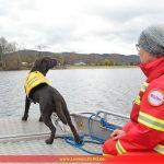 Intensives Trainingswochenende der DLRG-Wasserrettungshunde