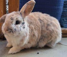 Tom-Tatze-Tierheim: Kaninchen Paulchen und Flo suchen Familienanschluß