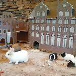 Meerschweinchen und Kaninchen: </br>Kleine Nager erfreuen Zoo-Besucher