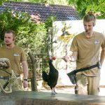 Zoo Heidelberg: Ein Tag bei den Tieren im Live Revier hinter die Kulissen