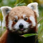 Zoo-Daten liefern wichtige Erkenntnisse für Artenschutz und Forschung