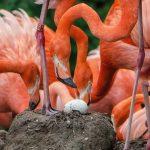 Außergewöhnliche Eier und flauschige Küken - Brutzeit im Zoo in vollem Gange