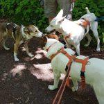Tag des Hundes im Tom-Tatze-Tierheim mit gemeinsamen Spaziergang begangen