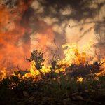 Kreisforstamt: Sonnenschein und Trockenheit führen zu starker Waldbrandgefahr