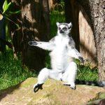 Erfrischung im Zoo Heidelberg: So kümmern sich die Tierpfleger bei Hitze um die Zootiere