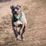 Kampfhunde auf Opfer gehetzt - Haftbefehle gegen zwei Tatverdächtige