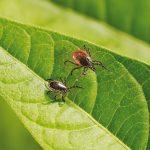 Vorsicht in der Natur: </br>Zecken können Krankheiten übertragen