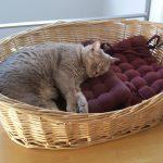 Tom-Tatze-Tierheim im Corona-Notfall-Modus – Wartezeiten möglich