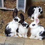 Viele Kaninchen im Tom-Tatze-Tierheim warten auf ein neues Zuhause