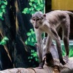 Artenschutztag im Zoo - Infos rund um die weltweiten Artenschutzprojekte