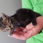Gut gemeint ist nicht gut gemacht: </br>Katzenbabys unwissentlich totgepflegt