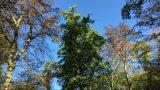 Vosicht im Wald: Viele Bäume durch Trockenschäden nicht mehr standsicher