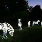 Die Welt der Zootiere im Abendlicht - Heidelberger Zoo-Leuchten bis 29. November