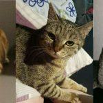 Sehr verdächtig: Gleich drei Katzen im Bereich Probsterwald / Sandhausen vermisst