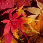 Fallendes Herbstlaub ist wichtige Resource – Tipps von den Gartenexperten