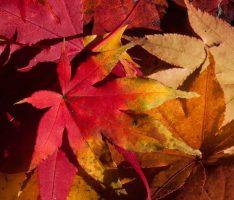Heute ist der astronomische Herbstanfang – Bald sind die Tage kürzer als die Nacht