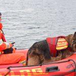 Rettungshundeprüfung bestanden!