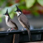 Inventur im Zoo: Mit 15 neuen und bedrohten Vogelarten ins Jahr 2020