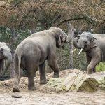 Erfolgreiches 2019: Über 490.000 Zoobesucher – Spannenden Projekte in 2020