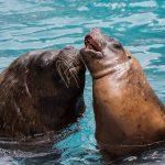 """Paarung, Balz und Gattenmord: """"Tour d'amour"""" am Valentinstag im Zoo Heidelberg"""