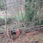 """Nachwirkungen von """"Sabine"""": Sturmholz in den Wäldern des Kreises wird beseitigt"""