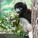 """Sag """"Ja"""" zum Artenschutz – Ein Artenschutz-Euro ab März im Zoo"""
