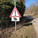 Mildes Wetter = Winterschlaf-Ende: Vorsicht, Krötenwanderung beginnt