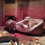 Zwei pelzige Winzlinge gesichtet – Nachwuchs bei den Erdmännchen im Zoo