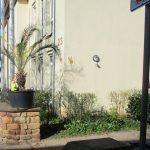 Palmendiebstahl beim Elisabeth-Ding-Kindergarten - Wer hat was gesehen?