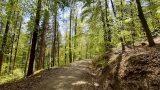 Dürre, Sturm und Schädlinge: Fördermittel für Waldeigentümer und Forstsektor