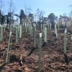 Aufforstung im St.Ilgener Wald  Neuanpflanzung von 2.000 klimastabilen Bäumen