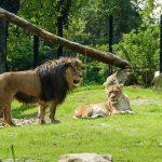 Ab heute wieder möglich: </br>Mit Online-Anmeldung in den Zoo