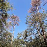 Kreisforstamt: Schwere Waldschäden sind Vorboten gravierender Veränderungen