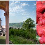 Pfingstferien vor Ort: Kultur, Natur und Kulinarik im Rhein-Neckar-Kreis