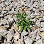 """""""Versteinerte Gärten"""" - Warum Schottergärten Pflanzen, Tieren und Klima schaden"""