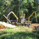 Keine Verschnaufpause für den Wald – Der Borkenkäfer füllt das Sommerloch