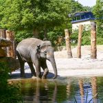 Besuch im Zoo wird wieder vielfältiger - Online-Anmeldung erforderlich